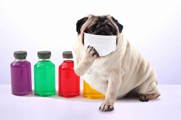 風邪をひいた犬